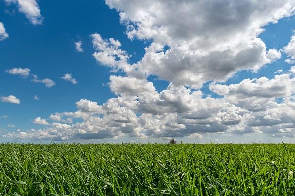 agricoltura ecostostenibile